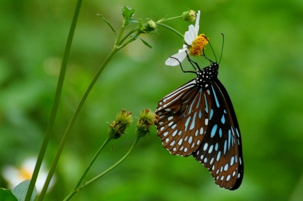 Butterfly at Detian
