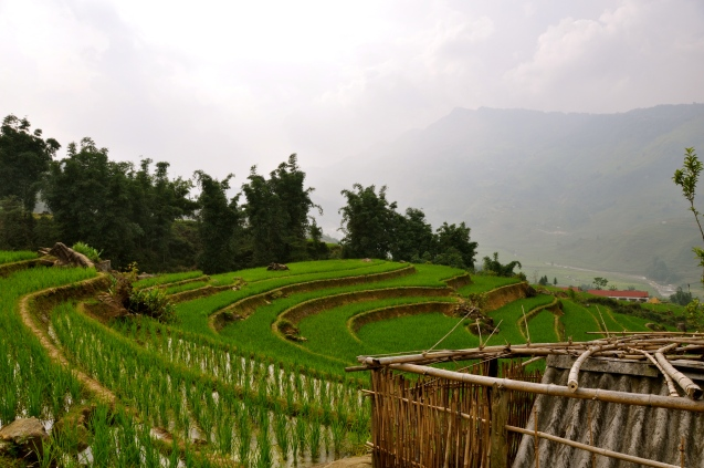 Looking out over Zaazaa's parent's rice paddies