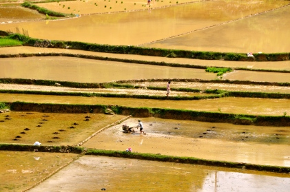 Rice paddies on Vietnamese side of the river
