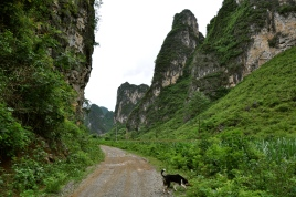 Our puppy guide through the Mingshi karsts