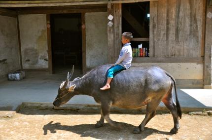 Boy riding a water buffalo