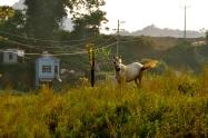 Horse near Bac Ha