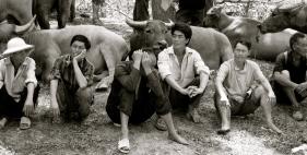 Hoping to sell buffalo at Can Cau Market