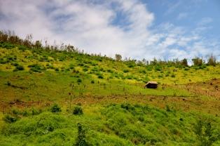 Bamboo hut high on the hillside