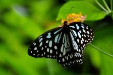 Obligatory butterfly shot