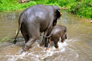 Mother and baby elephant after a bath