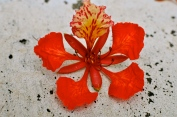 Flower scattered on the ground
