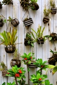 Plants potted in coconut shells