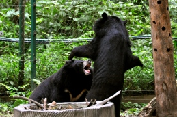 A fight at the bear rescue center