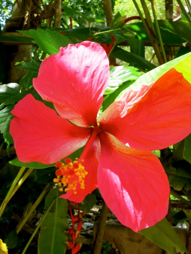Flower in Bana Village