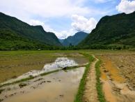 Our path through the rice paddies