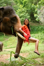 Ting riding on Boonyen's tusks